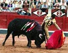 Bullfight in Marbella