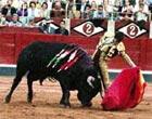 Bullfight in Marbella