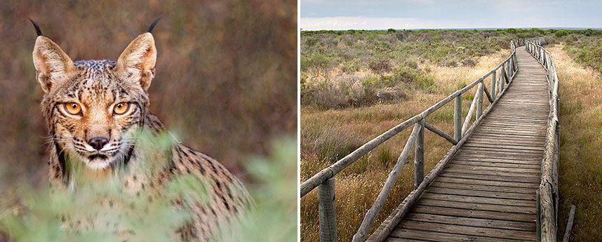 Andalusië: Nationaal Park Doñana
