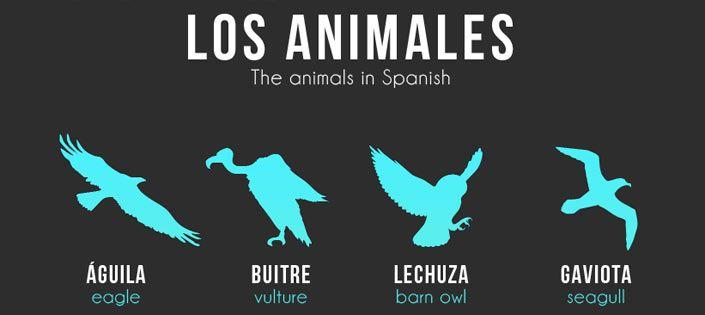 Los Animales: Animal Names in Spanish