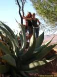 Charlie's Angels behind huge cactus