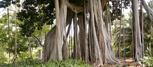 Spanish gardens tenerife 39 s el botanico donquijote for Jardin spanish