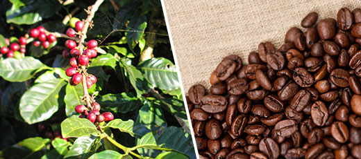 Mexican Coffee beans