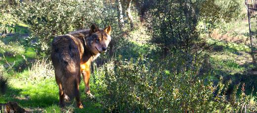 Wildlife in Spain - Native Spanish Animals | don Quijote