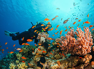 Learn to Scuba Dive in Tenerife, Spain