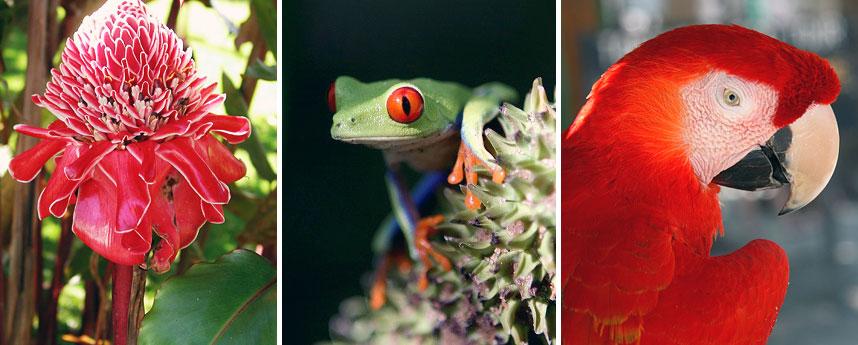 Fauna van Costa Rica