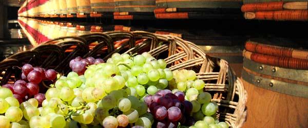 Le vin espagnol